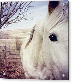 White Horse Close Up Acrylic Print by Lori Andrews