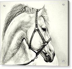 Acrylic Print featuring the drawing White Horse by Heidi Kriel