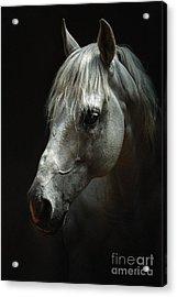 White Horse Portrait Acrylic Print