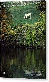White Horse Reflected In Autumn Pond Acrylic Print