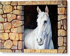 White Horse1 Acrylic Print by Farhan Abouassali