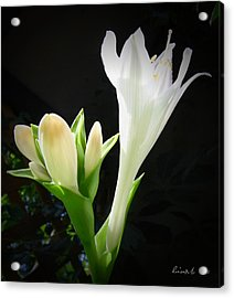 Acrylic Print featuring the photograph White Hostas Blooming 7 by Maciek Froncisz