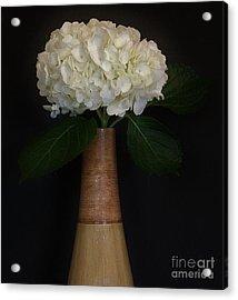 White Hydrangea In Gold Vase Acrylic Print by Marsha Heiken