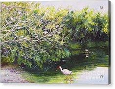 White Ibis Haven Acrylic Print by Karol Wyckoff