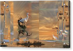White Ibis In Abstract Acrylic Print