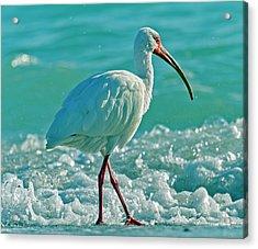 White Ibis Paradise Acrylic Print