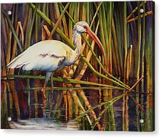 White Ibis Acrylic Print by Sue Zimmermann