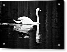 White In Black  Acrylic Print