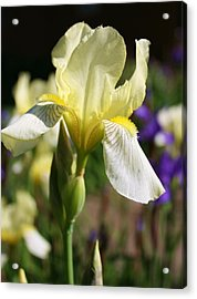 Acrylic Print featuring the photograph White Iris 2 by Bruce Bley