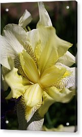 Acrylic Print featuring the photograph White Iris by Bruce Bley