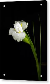 Acrylic Print featuring the photograph White Iris by Elsa Marie Santoro