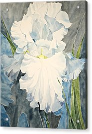 White Iris - For Van Gogh - Posthumously Presented Paintings Of Sachi Spohn   Acrylic Print
