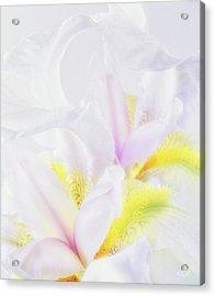 White Iris Acrylic Print by Leland D Howard