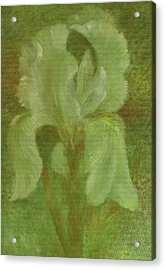 Acrylic Print featuring the painting White Iris Painterly Texture by Judith Cheng