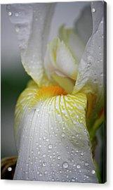 White Iris Study No 7 Acrylic Print by Teresa Mucha