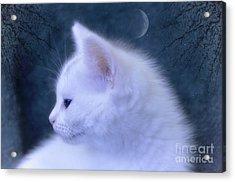 White Kitten At Night Acrylic Print by Elaine Manley