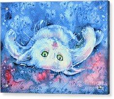 White Kitten  Acrylic Print
