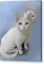 White Kittens Acrylic Print by Jane Schnetlage