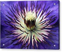 White-lilac Flower Acrylic Print