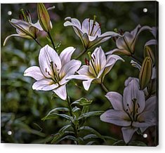 Acrylic Print featuring the photograph White Lilies #g5 by Leif Sohlman