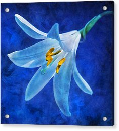 Acrylic Print featuring the digital art White Lilly by Ian Mitchell