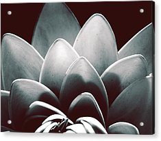 White Lotus At Dawn Acrylic Print