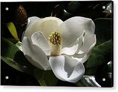 White Magnolia Flower Acrylic Print