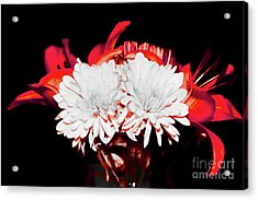 White Mums And Red Lilies Acrylic Print
