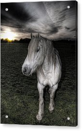 White Night Acrylic Print by Fraser Davidson