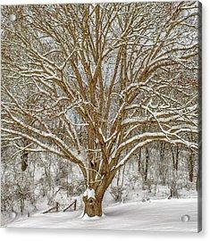 White Oak In Snow Acrylic Print