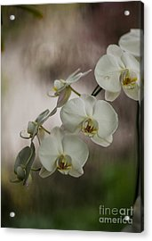 White Of The Evening Acrylic Print by Mike Reid