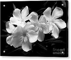 White Oleander Acrylic Print by Amar Sheow