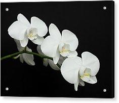 White On Black Acrylic Print