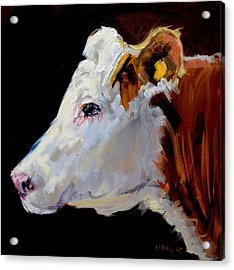 White On Brown Cow Acrylic Print