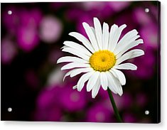 White On Pink Acrylic Print