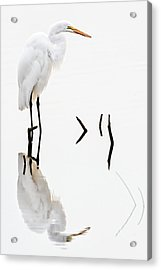 White On White Acrylic Print by Dawn Currie