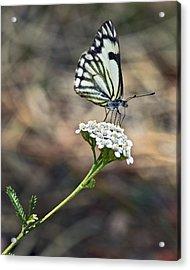 White On White Acrylic Print by James Steele