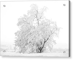 White On White Acrylic Print by Marilyn Hunt