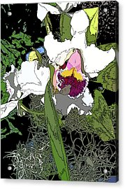 White Orchid Acrylic Print by Adina Campbell