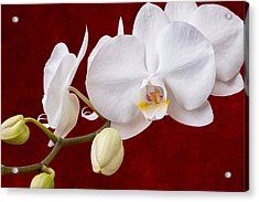 White Orchid Closeup Acrylic Print