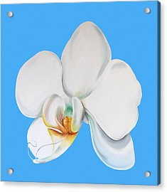 Acrylic Print featuring the painting White Orchid by Elizabeth Lock