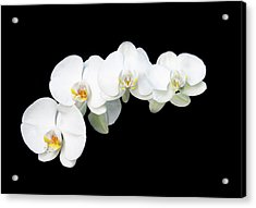 Acrylic Print featuring the photograph White Orchid Flower by Michalakis Ppalis