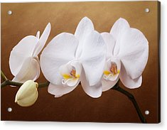 White Orchid Flowers And Bud Acrylic Print