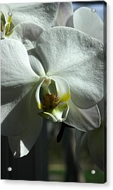 White Orchid In Spring Acrylic Print by David Bearden