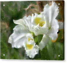 Acrylic Print featuring the photograph White Orchid by John Hix