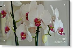 White Orchid Mothers Day Acrylic Print by Marsha Heiken