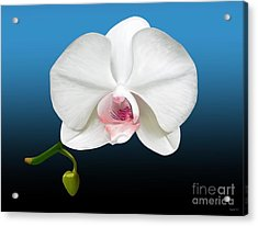 Acrylic Print featuring the digital art White Orchid by Rand Herron