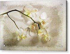 White Orchid Acrylic Print by Randi Grace Nilsberg