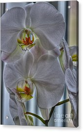 White Orchids Acrylic Print by David Bearden