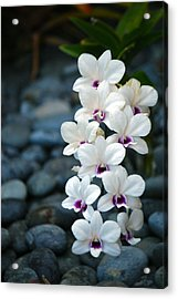 Acrylic Print featuring the photograph White Orchids by Debbie Karnes